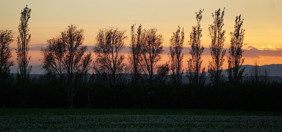 Sunset, Autumn, Autumn Mood