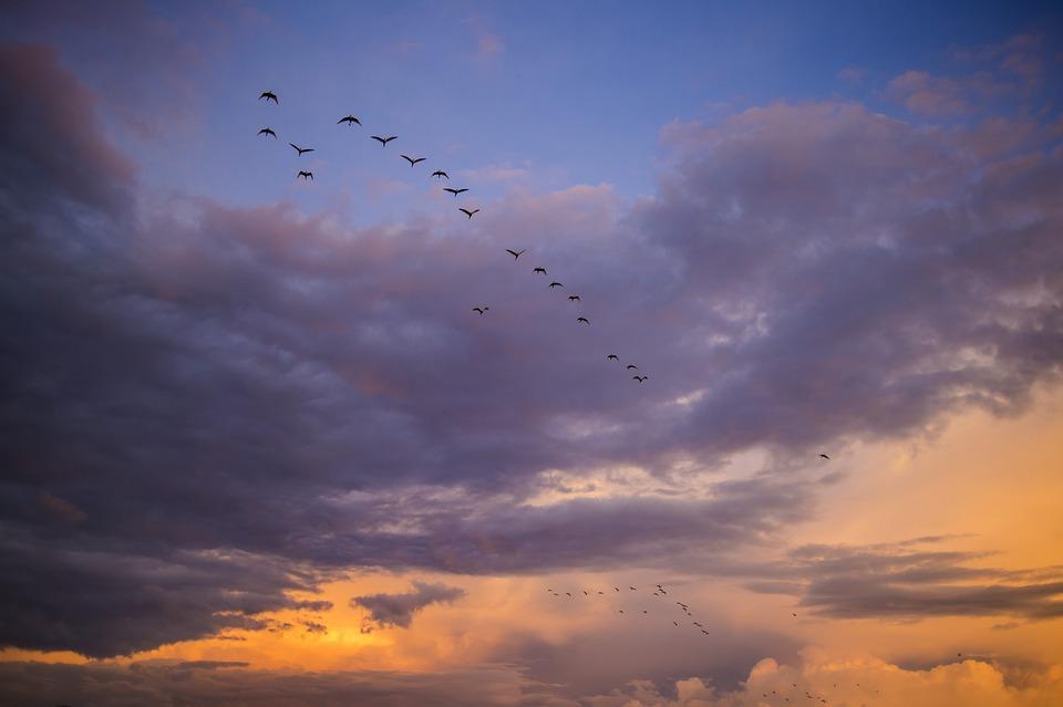 Migrating, Birds, Africa, Sunset, Migration, Sky