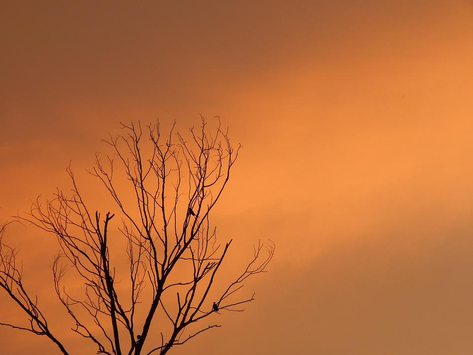Sunset, Death Tree, Birds On Tree