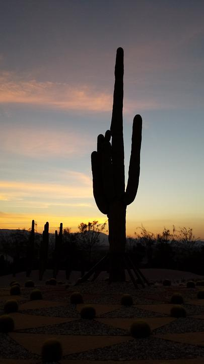 Backlight, Cactus, Sunset