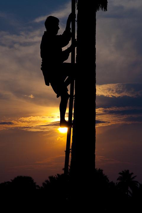 Silhouette, People, Climbing, Palm, Tree, Sun, Sunset