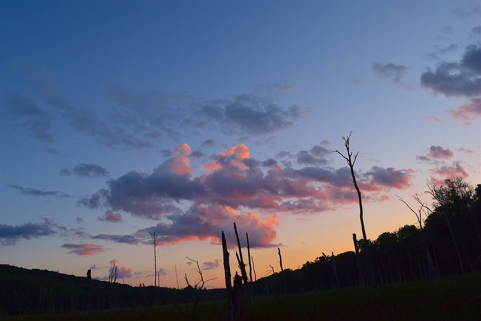 Sunset, Sky, Trees, Silhouette, Clouds, Landscape