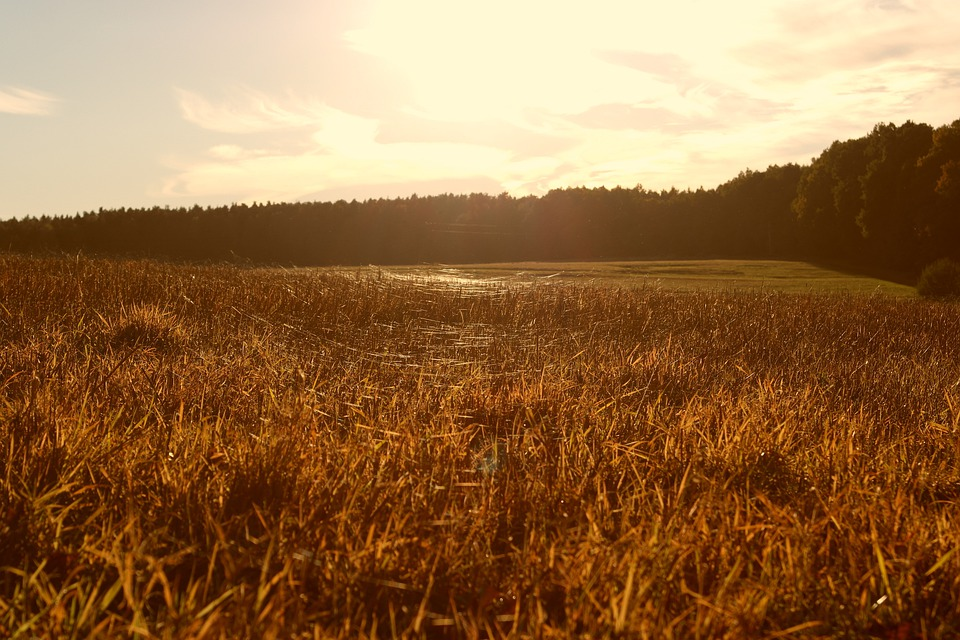 Meadow, Sunset, Time, Reflected Rays, Cobwebs