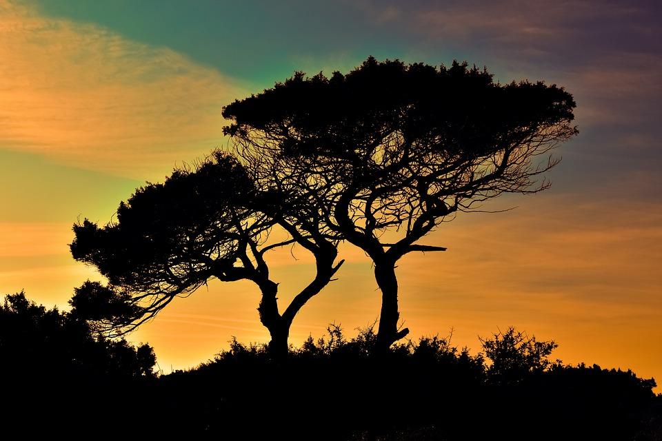 Cyprus, Cavo Greko, National Park, Trees, Sunset