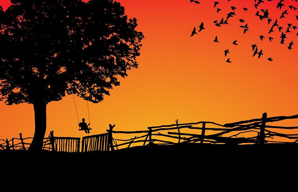 Free Photo Sunset Dawn Sun Tree Silhouette Sky Nature