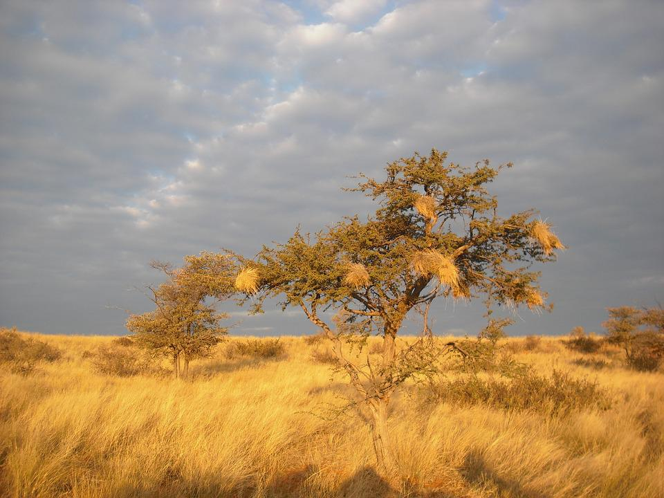 Savannah, Africa, Tree, Sunset, Drought
