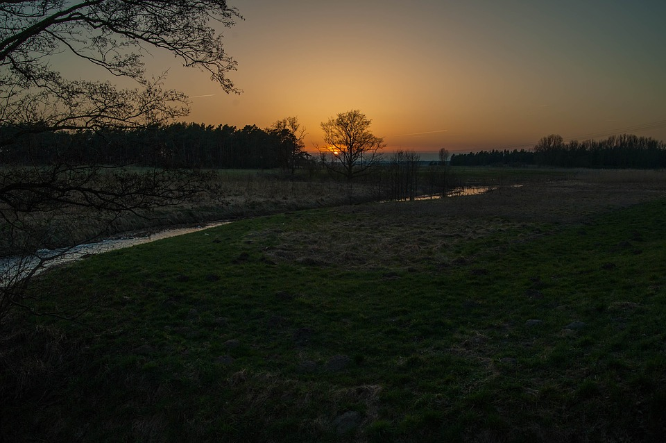 Sunset, Horizon, Evening Sky, Forest