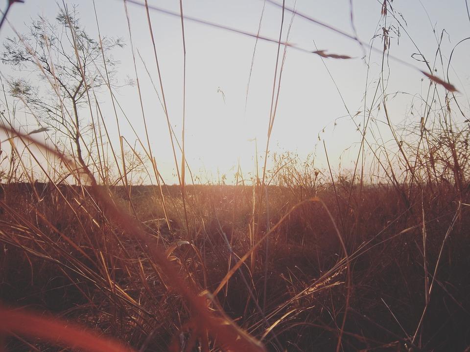 Sunset, Grasses, Fied, Grassy, Grassy Field, Meadow