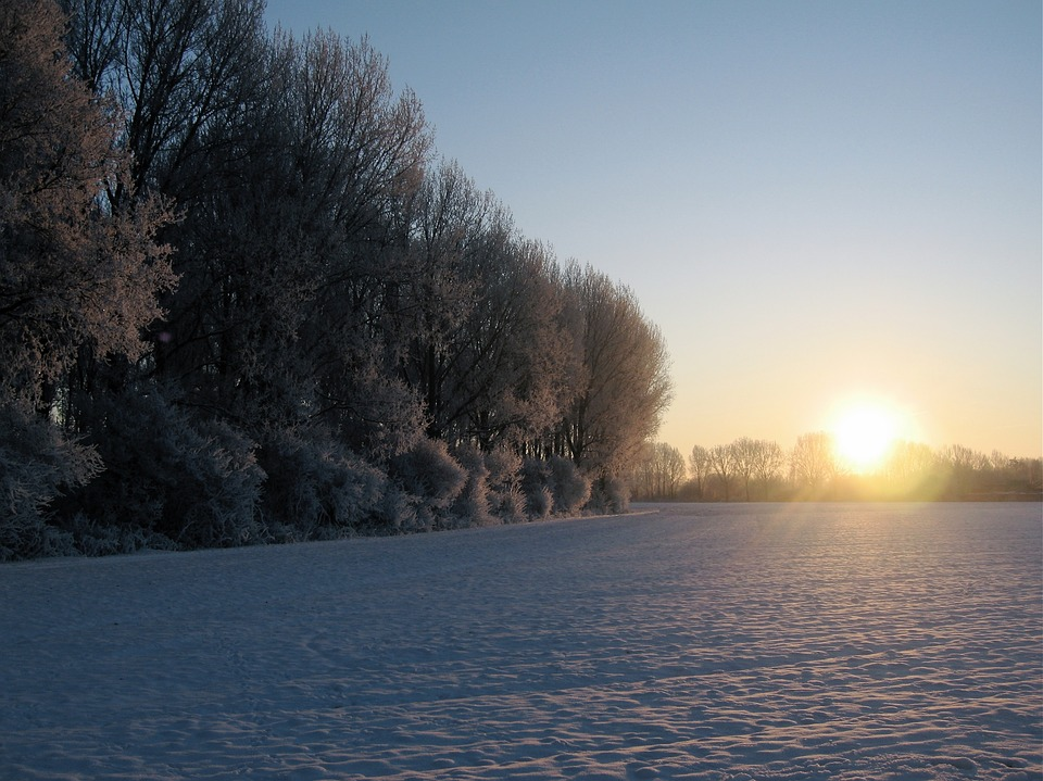 Forest, Winter, Sunset, Field In Snow