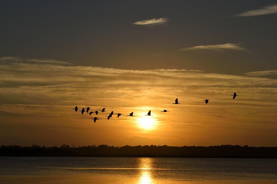 Sunset, Florida, Birds, Avian, Herons Flying, Sky