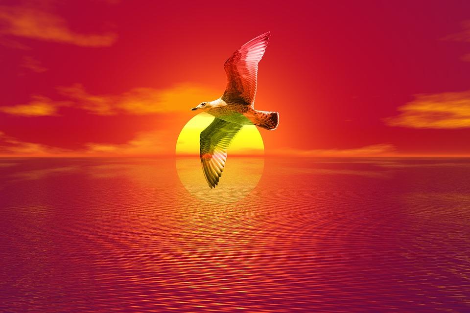 Gull, Sunset, Sea, Seagull, Landscape, Flying