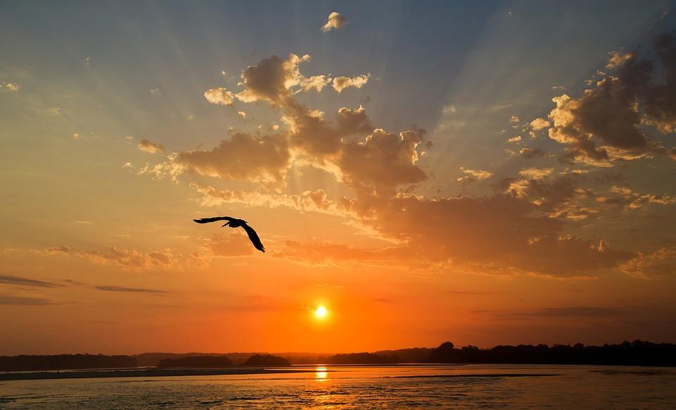 Sunset, Bird, Sky, Nature, Freedom, Sea, Flying