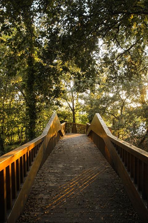 Forest, Trees, Bridge, Sun, Sunset, Green, Landscape