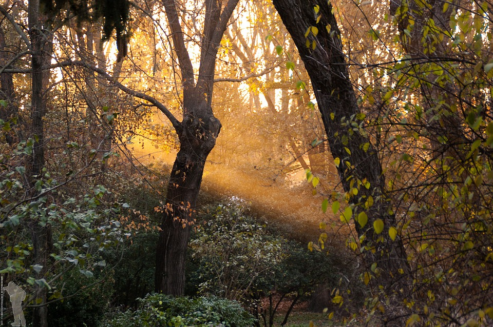 Forest, Jungle, Sunset, Garden, Trees, Madrid