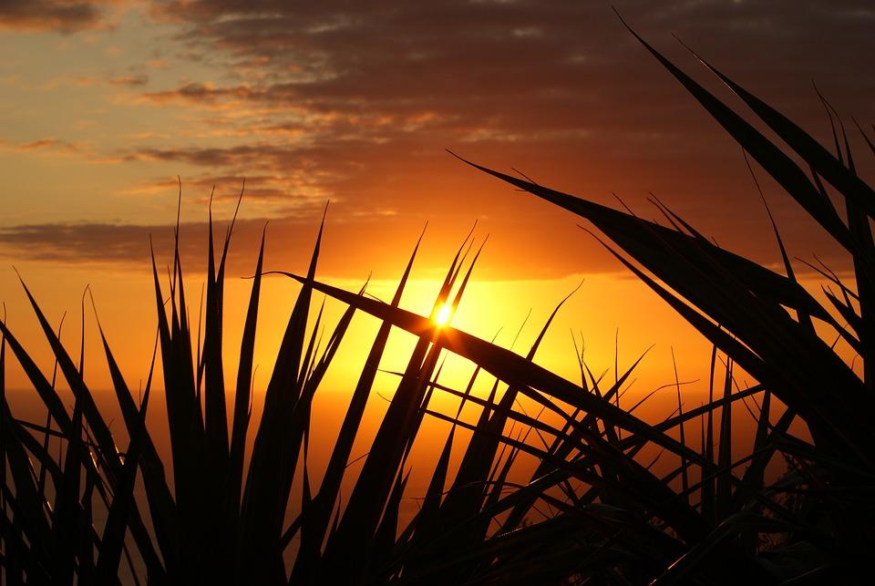 Grasses, Silhouette, Sunset, Sun, Sunlight, Dusk