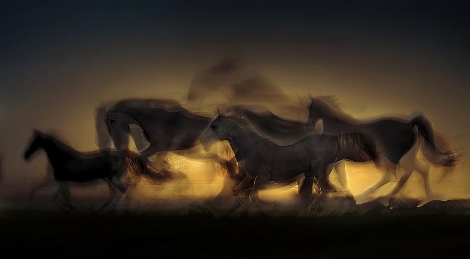 Horse, Sunset, Saddle