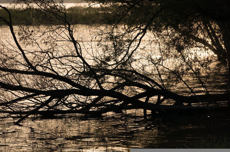 Lake, Branches, Sunset, Trees, Silhouette, Water