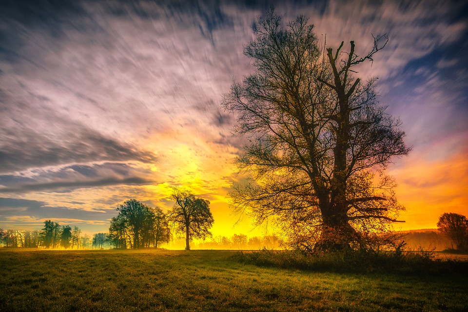 Sky, Tree, Nature, Landscape, Sunset, Twilight, Evening
