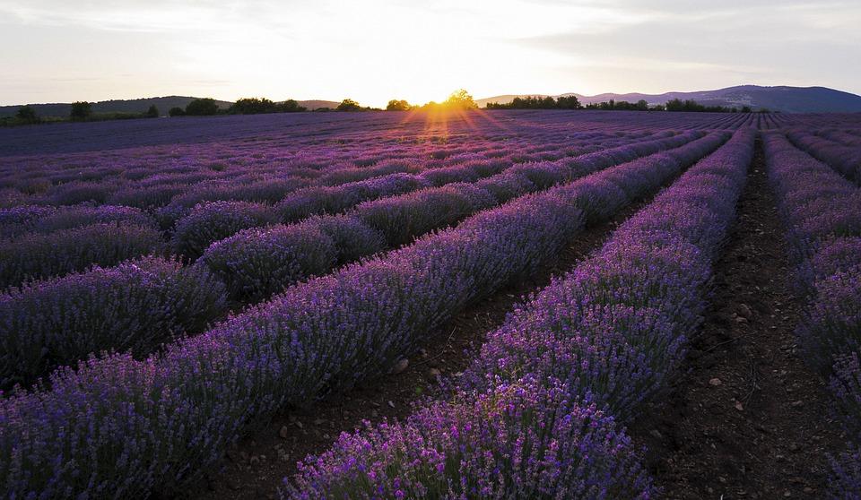 Lavender, Sunset, Sky, Nature, Purple, Summer