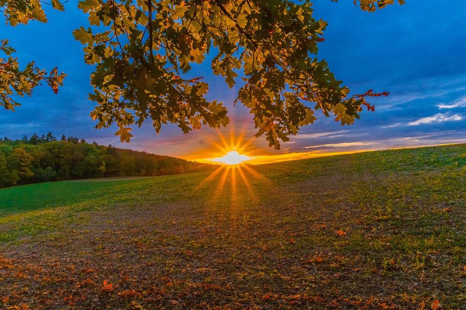 Sunset, Sun, Tree, Leaves, Sky, Landscape, Nature, Dusk