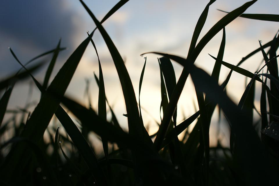 Grass, Meadow, Sunset, Silhouette, Plant, Spring