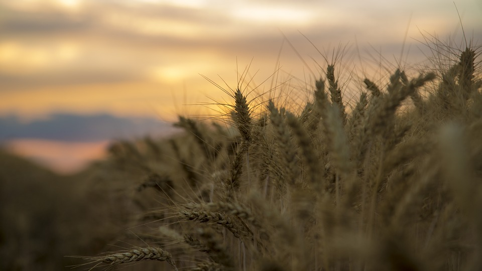 Medina, Sunset, Wheat, Blue White-a Surname, Beautiful