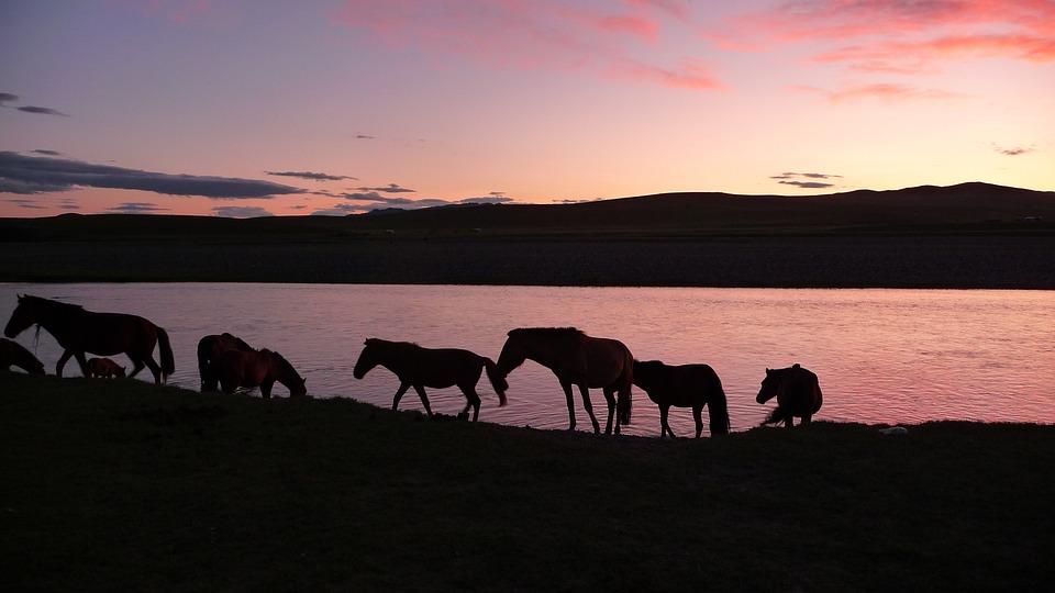 Sunset, Horses, Mongolia
