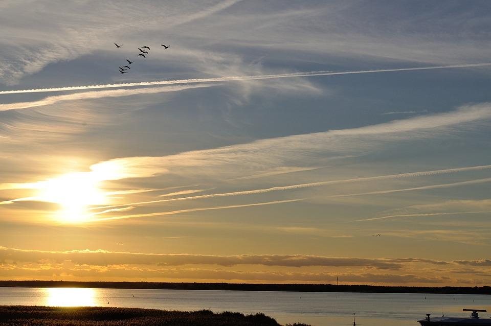 Cranes, Nature, Sunset, Animal World, Migratory Birds
