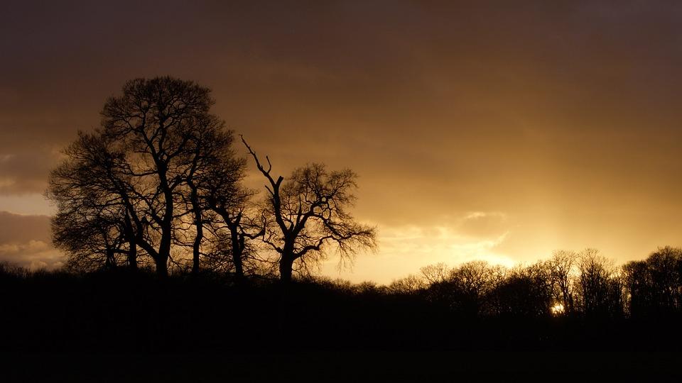 Sunset, Nature, Tree, Sun, Sky