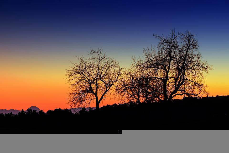 Nature, Sunset, Outdoors, Dusk, Trees, Wallpaper
