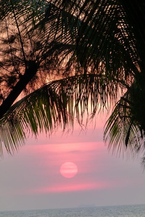 Sunset, Palm Trees, Sea, Holiday, Evening Sky, Summer