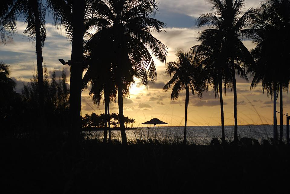 Palm Trees, Sunset, Silhouette