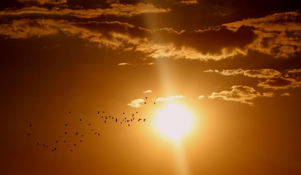 Sunset, Birds, Cloud, Sun, Sky, Red, Flock, Brown Sky