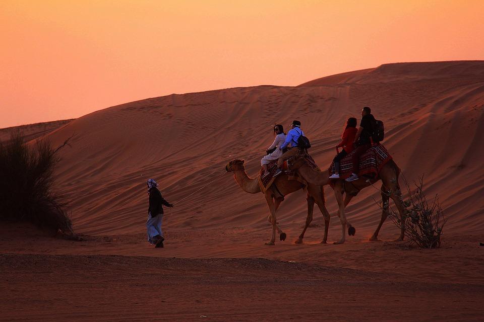 Sunset, Dawn, Desert, Camel Ride, Ride, Outdoors, Sun