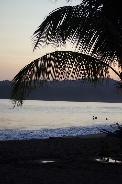 Palm Tree, Sunset, Shadow