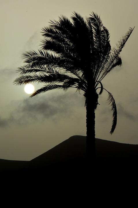 Palm Tree, Sun, Sunset, Landscape, Nature, Silhouette