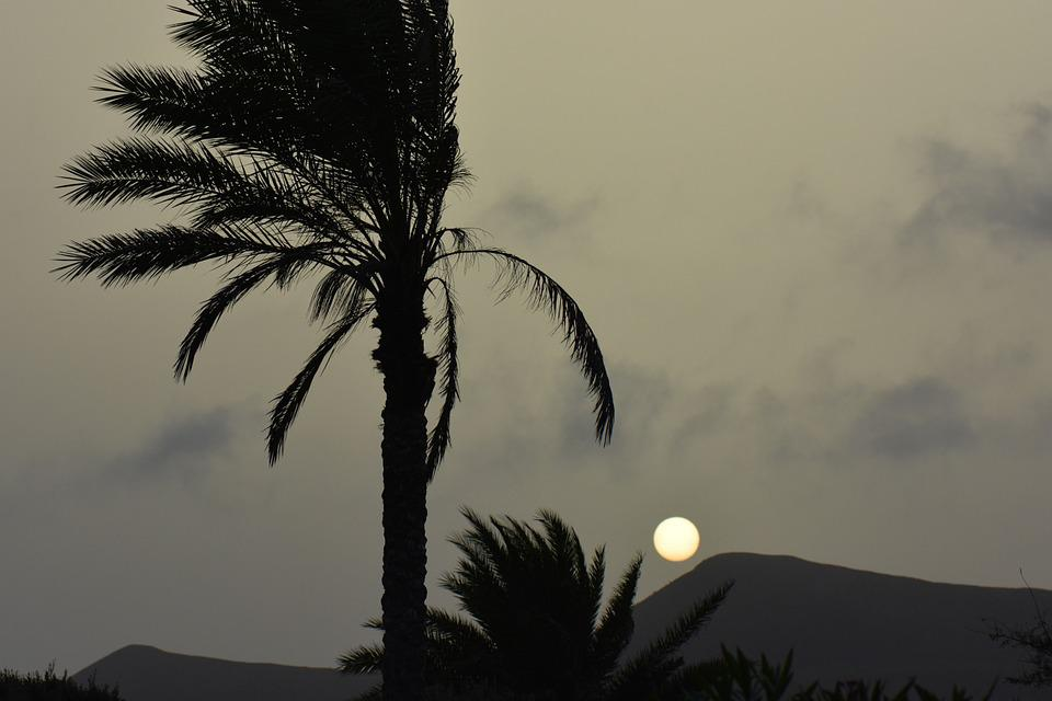 Palm Tree, Sun, Sunset, Landscape, Nature, Silhouette