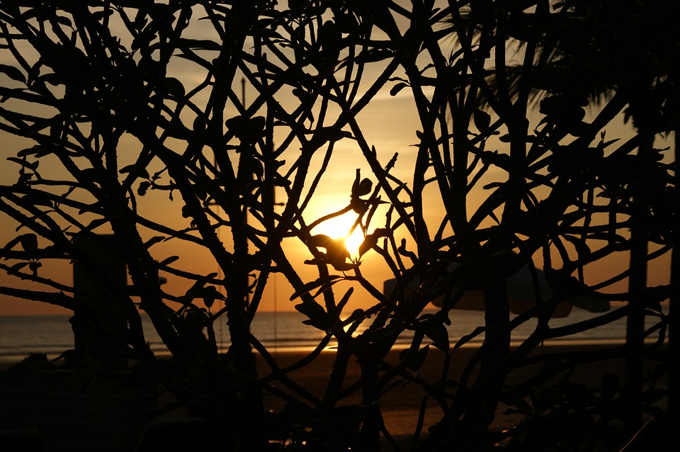 Tree, Silhouette, Sunset