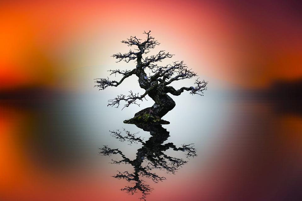 Sunset, Nature, Tree, Sun, Himmel, Outdoor, Silhouette