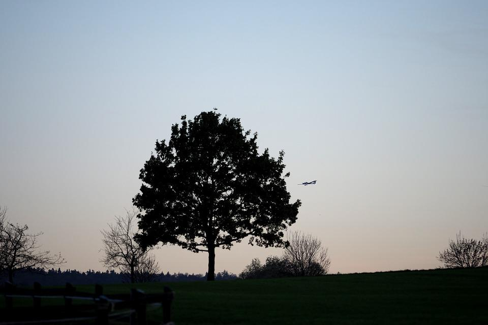 Sunset, Tree, Aircraft, Landscape, Sky, Nature, Dusk