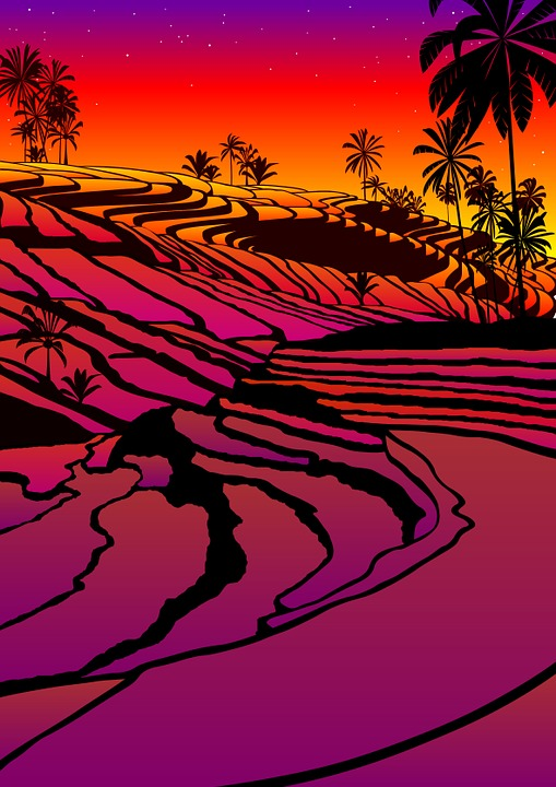 Rice Terraces, South Island, Sunset
