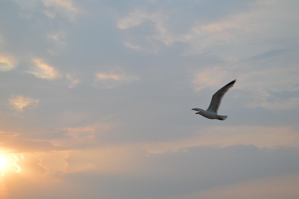 Seagull, Sky, Sunset, Spiekeroog