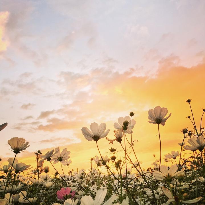 Sunset, Flower, Spring