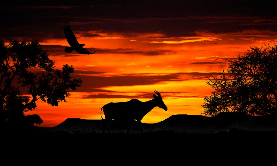 Nature, Sunset, Gazelle, The Lion, Africa, Silhouette