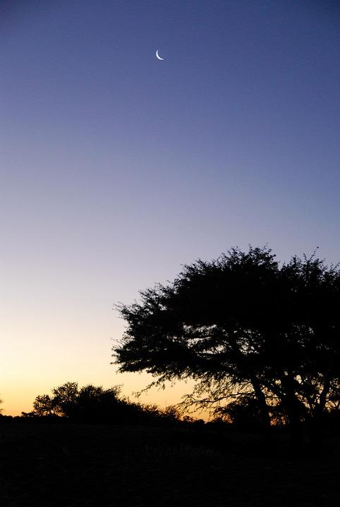 Sunset, Kalahari, Moon, Tree, Sky, Africa