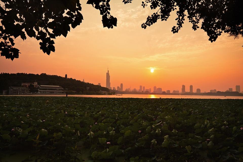 Sunset, Tree, Dawn, Twilight