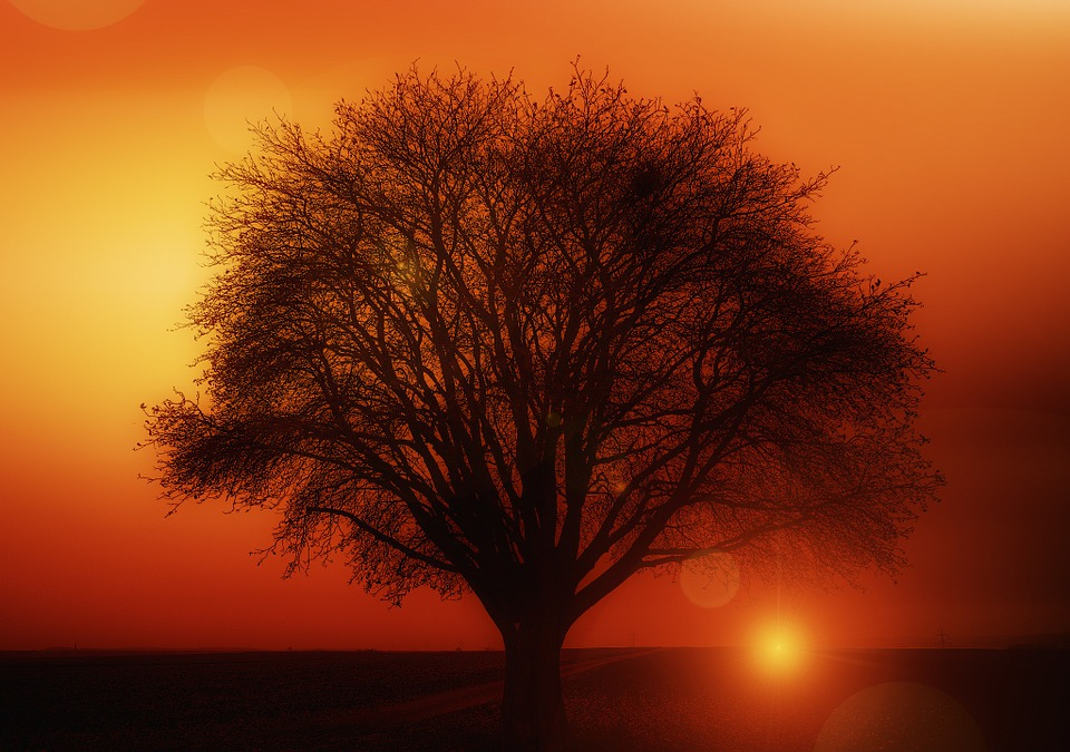 Tree, Solitary, Sunset, Weather Mood, Clouds