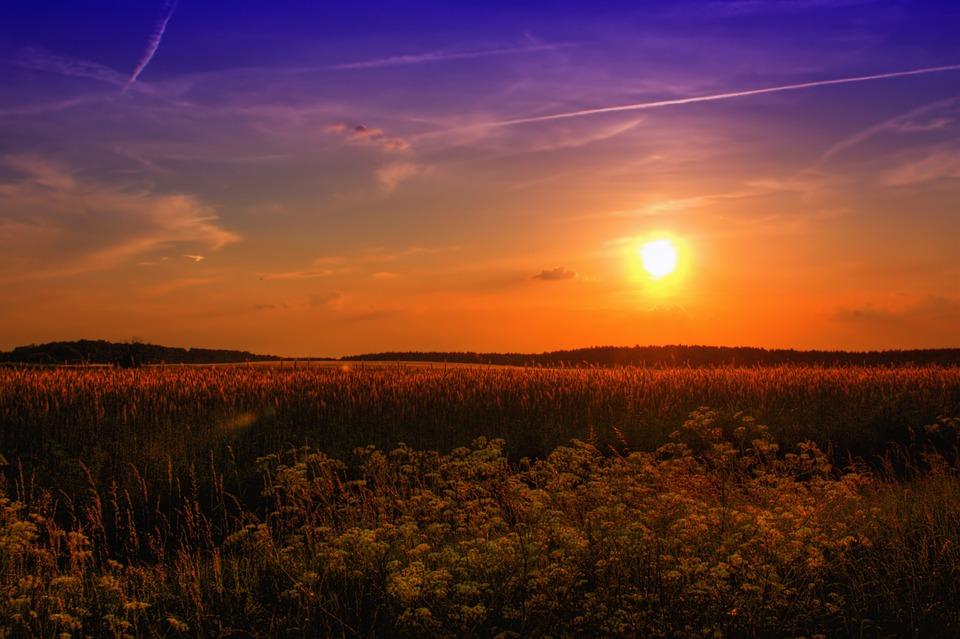 Sunset, Field, Meadow, Flowers, Wildflowers
