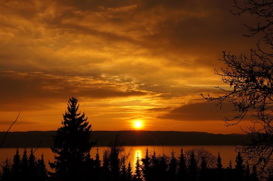 Sunset, Orange, Sun, Sunny, Cloud, Branches, Winter