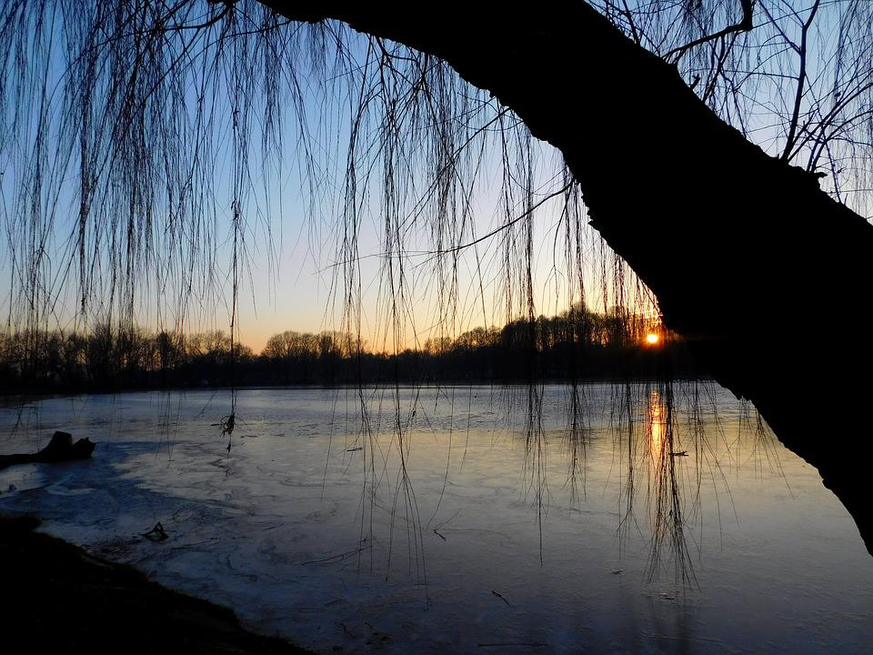 Weeping Willow, Sunset, Waters, Lake, Frozen, Winter